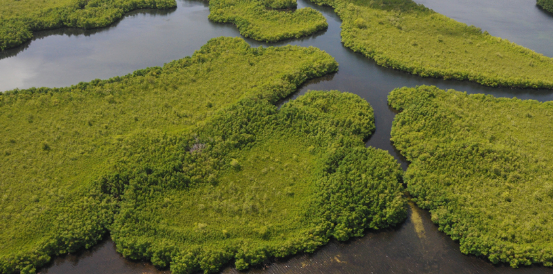 Découvrez la Mangrove en Guadeloupe